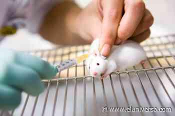 Imperial College de Londres prueba vacuna contra el nuevo coronavirus 2019-nCoV en ratones - El Universo