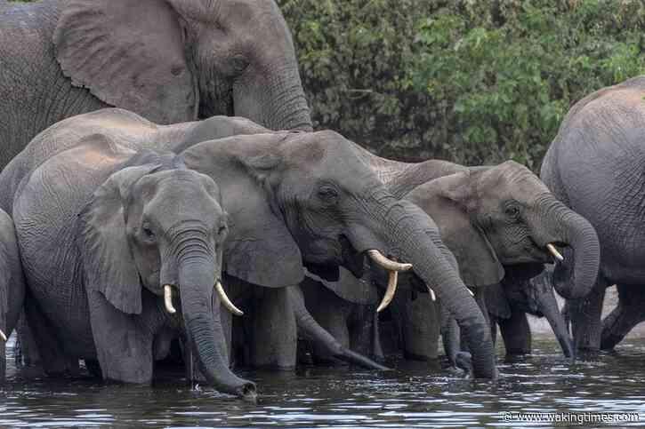 Botswana To Allow Hunters To Kill Elephants For $43,000 Per Head