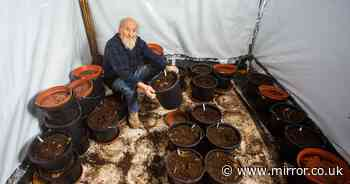 Pensioner arrested for growing cannabis won't stop as he says it keeps him alive