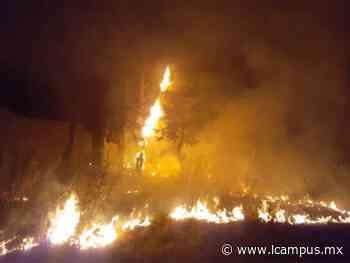 Intentan prender fuego a un refugio con perros, ovejas ... y cuidadores - LCampus