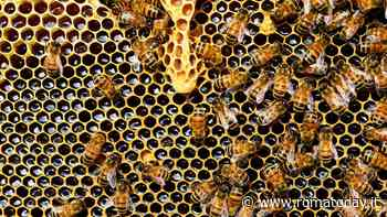 In arrivo arnie comunali per l'apicoltura: asse M5s-Lega-Pd per salvare le api