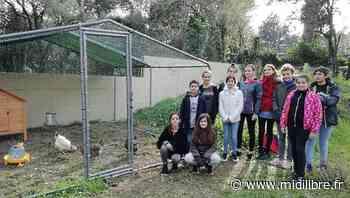 Un poulailler au collège Les Pins pour sensibiliser à l'environnement - Midi Libre
