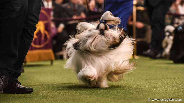 See our 29 favorite photos from the Westminster dog show