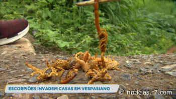 Escorpiões em praça preocupa moradores de Vespasiano (MG) - R7