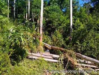 Trabalhador morre após ser atingido por eucalipto em Palmitos - Portal DI Online