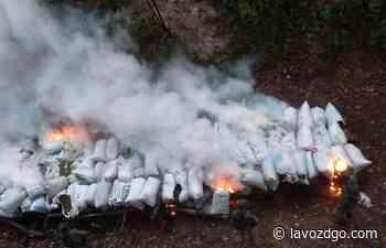 Una tonelada de marihuana incinerada en el poblado Macho Bayo, Santiago Papasquiaro - La Voz de Durango