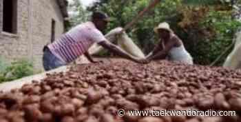 Colombia - Tumaco Nariño apuesta a la sustitución de la hoja de coca por la siembra de cacao y demás frutales - Taekwondo Radio