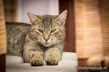 In Chelyabinsk, the cat helped the hostess to escape from the burning apartment - The Times Hub