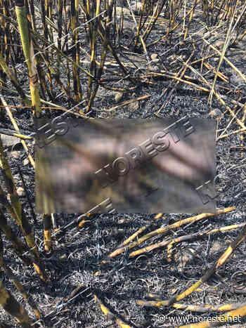Hallan cuerpo calcinado de un hombre, en Paso del Macho - NORESTE