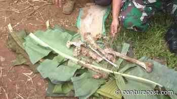 Petani Salem Temukan Tulang Manusia Saat Mencangkul di Sawah - Pantura Post