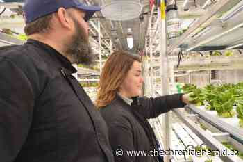 Wolfville's Acadia University growing greens year-round inside campus Growcer - TheChronicleHerald.ca