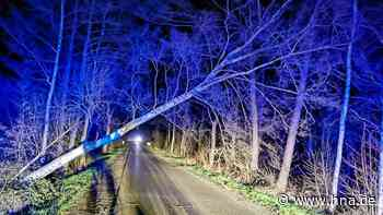 Totalschaden: Autofahrer kracht auf gesperrter Strecke im Solling in umgestürzten Baum | Dassel - HNA.de