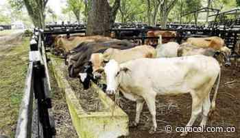 Sector ganadero afectado por la sequía - Caracol Radio