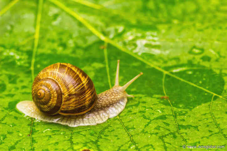 Where did all the garden snails go? Here are some ideas