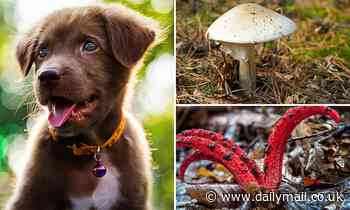 Urgent warning for pet owners to be wary of a spike in dangerous mushrooms