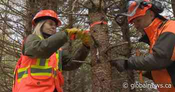 Province adds millions more to forestry transition fund, while forest workers want their cut