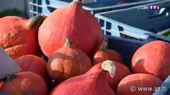 Marché d'automne : les légumes d'hiver ont la cote à Cysoing (Nord) - LCI
