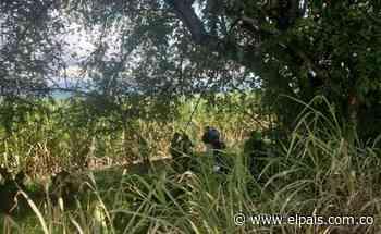 Encuentran cadáver en medio de cañaduzal en la vía Cali - Jamundí - El País – Cali