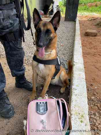 Cadela fareja drogas em bolsa de visitante de presídio em Itaitinga - Diário do Nordeste