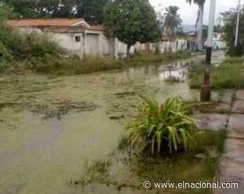 Habitantes de Mata Redonda y La Punta temen que el lago de Valencia ocasione una tragedia - El Nacional