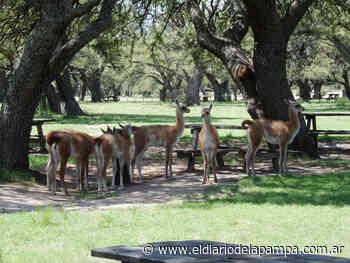 Parque Luro: cierran aguadas y provocan desplazamientos de ciervos - El Diario de la Pampa