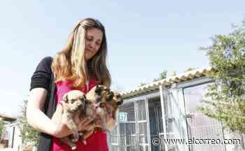 La Unión Europea quiere terminar con el comercio ilegal de animales de compañía - El Correo