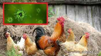Bretzfeld bei Heilbronn: Vogelgrippe auf Hof festgestellt - Tiere getötet | Region - echo24.de