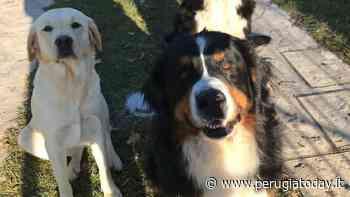 Tre cani scappati da casa a San Mariano, l'appello dello Sportello a 4 zampe - PerugiaToday