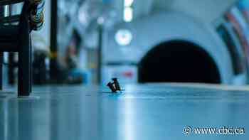 This photo taken in the London Underground wins top wildlife photography prize