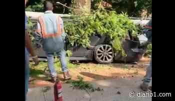 VIDEO| Conductor se estrella contra un poste en Texistepeque, Santa Ana - diario1.com