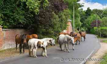 Let's move to the New Forest: jolly, if you have the lolly