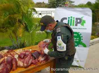 Incautados 170 kilos de carne en operativos contra el contrabando en Arauca - Extra Bucaramanga