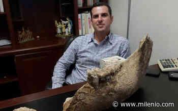 En Sabinas Hidalgo, encuentran fósiles de posible mamífero gigante - Milenio