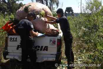 San Pedro: robaban yerba, vieron a la policía y se dieron a la fuga - EL TERRITORIO