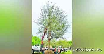 San Pedro planta primer árbol en Bosques del Valle - El Horizonte