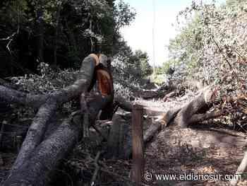 Denuncian graves daños en la Reserva de Santa Catalina por una obra eléctrica - El Diario Sur