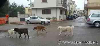 """Velletri - L'appello: """"Salvate quei 4 cani randagi. Ho rischiato un incidente per non centrarli..."""" - Castelli Notizie"""