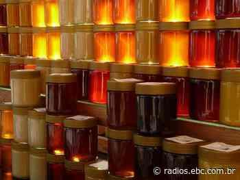 Apicultores de Ortigueira (PR) produzem mel de excelência - EBC