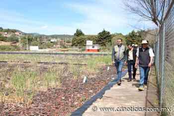 Atienden Semaccdet y CEAC, Humedal de San Jerónimo Purenchécuaro - Cadena Digital de Noticias