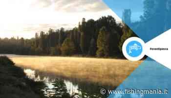 Gare a Peschiera del Garda - Feeder & Colpo - Fishingmania - La pesca sportiva e non solo! - Fishingmania