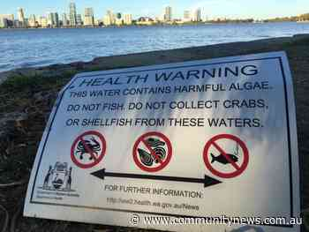 News Toxic algae in Swan river warning extended - Community Newspaper Group