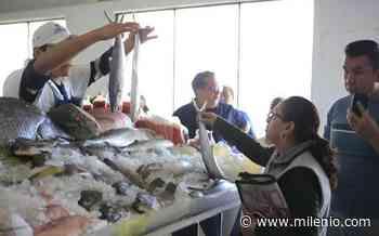 Altamira: Sube el precio del pescado y marisco a semanas de cuaresma - Milenio