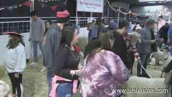 Comunidad celebra el Día de San Valentín en el Rodeo San Antonio - Univision
