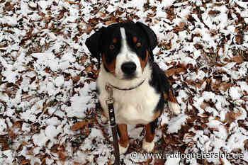 Nach Hundezählung: Herzebrock-Clarholz nimmt mehr Hundesteuern ein - Radio Gütersloh