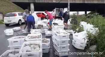 Caixas de camarões congelados caem de caminhão e atrapalham trânsito no Cajuru - Jornal do Estado