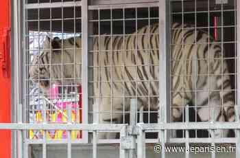 Lizy-sur-Ourcq : la présence d'un cirque avec animaux sauvages agace la mairie - Le Parisien