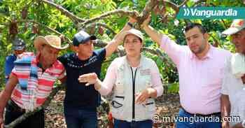 Cacao de Ciénaga del Opón se proyecta al mundo - Vanguardia