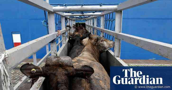 Ireland revokes licence of livestock ship operator over low performance rating