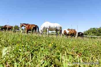 Pferdesteuer in Tangstedt: Oberverwaltungsgericht beendet den Rechtsstreit - Cavallo.de