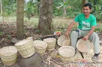 Ruta 504: Santa Bárbara, tierra de artesanos del junco y la palma - La Prensa de Honduras